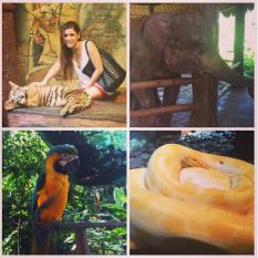 Rhino Safari - Bali